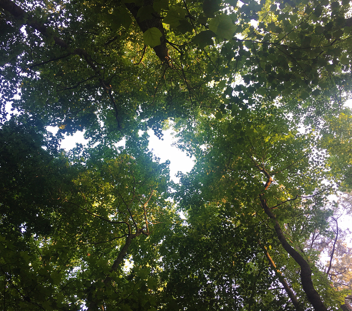 CampFI-Is-Green