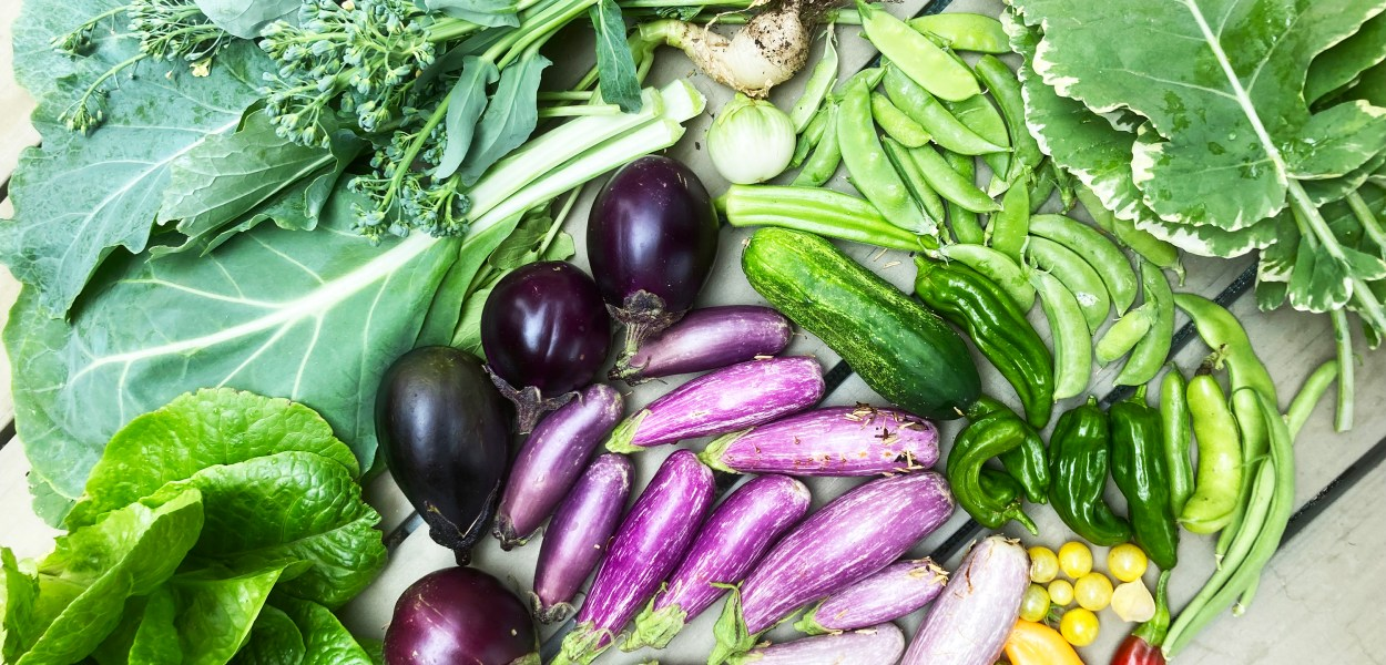 A spread of eggplants, tomatoes, peppers and green veggies from Tanja's garden