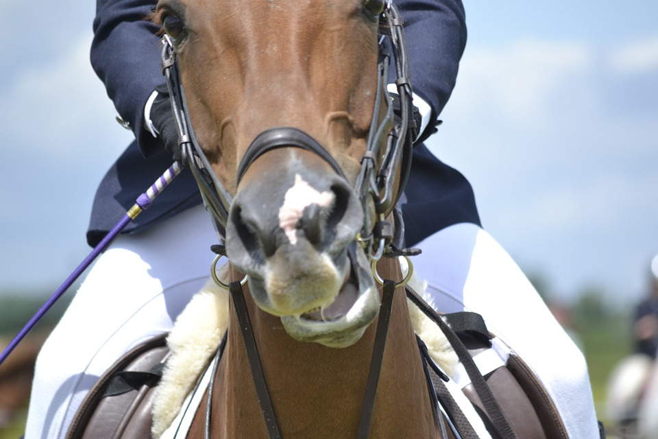Pain and lameness in ridden horses