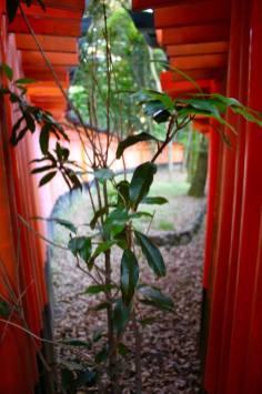 Fushimi Inari Shrine13