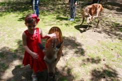 Nara Park3