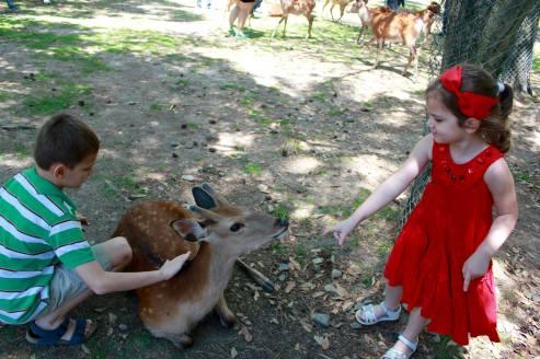 Nara Park8