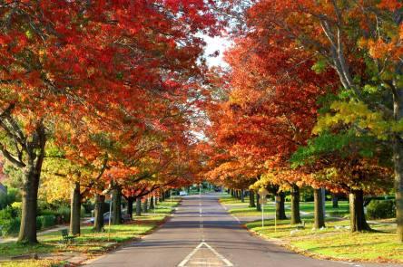 Autumn 20191