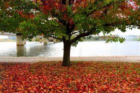 Autumn 20193