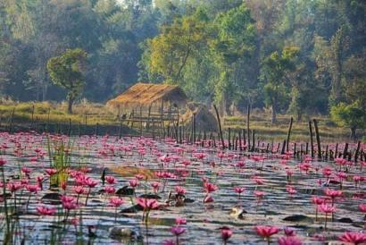 Thai Village61