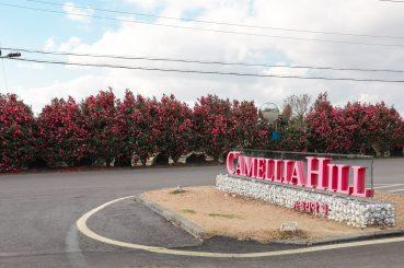 Camellia Hill 5
