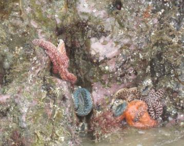 Abalone Cove1