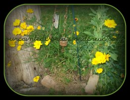 Wild Flowers in front of the tree stump!