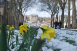 Harbingers of spring in front of the Chateau of Versailles...