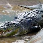 Top 10 Largest Crocodiles Ever Recorded