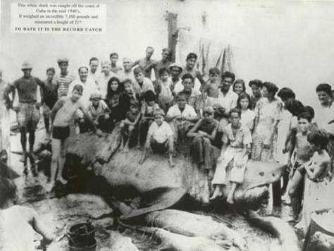Largest great white sharks - The Cuba Great White Shark (1945)