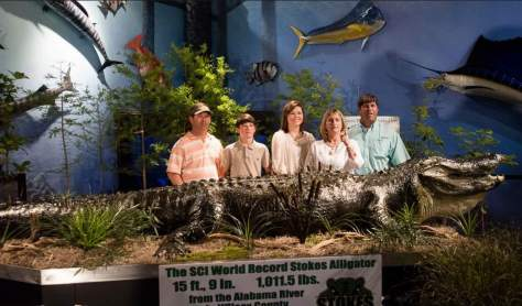 Stokes Alligator, Alabama - the largest alligator ever recorded