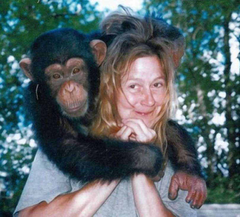 Travis, the chimpanzee