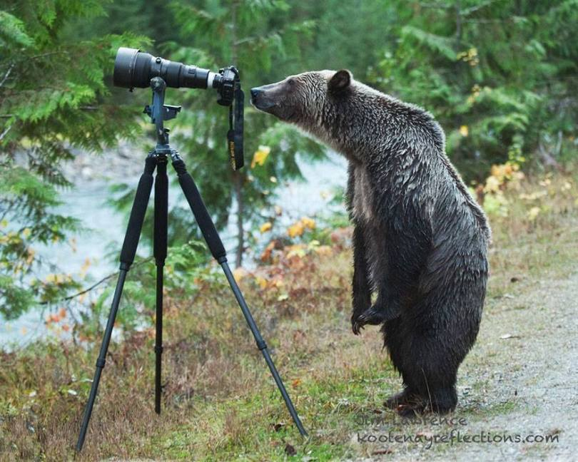 The bear and the camera