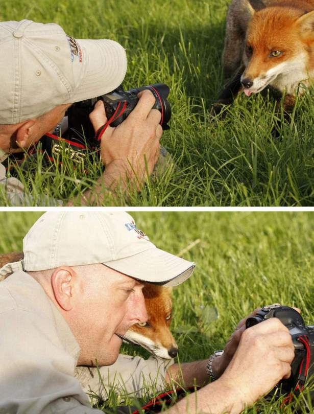 A fox and photographer