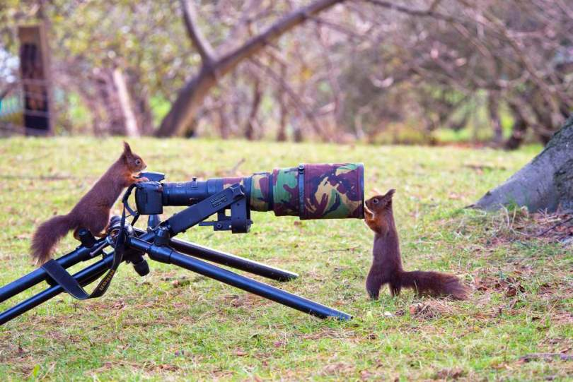 Two red squirrels and a camera