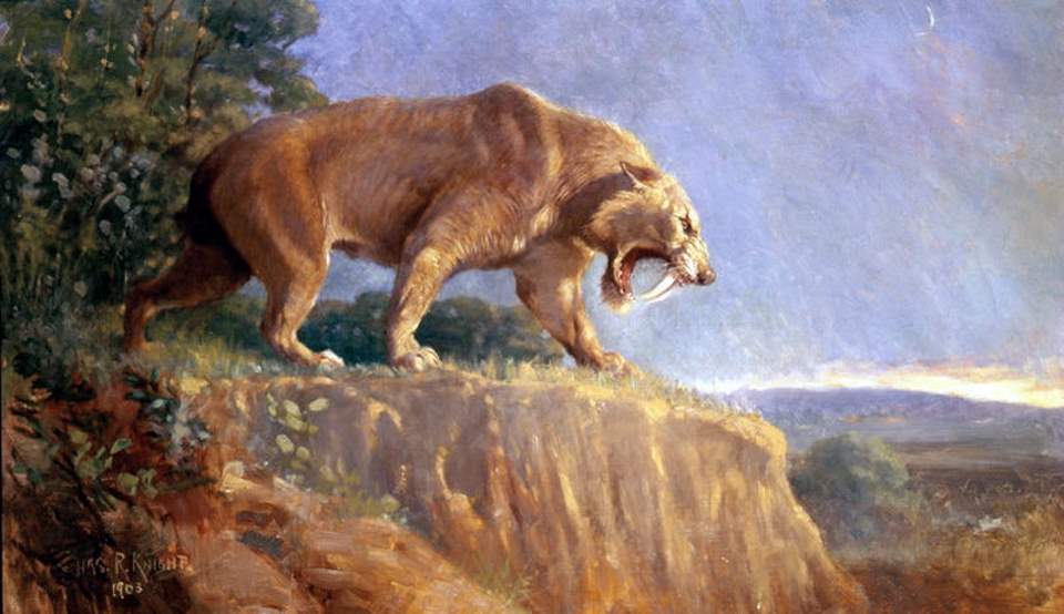 Smilodon populator restoration