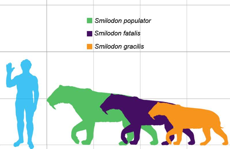Smilodon size comparison