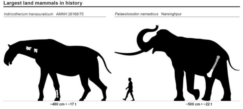 Largest land mammals ever