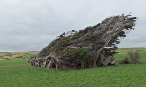 Twisted trees of Slope Point, New Zealand