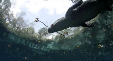 Gator Uses Bait Stick to Catch Egrets