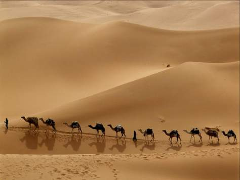 A Caravan in Libyan Desert