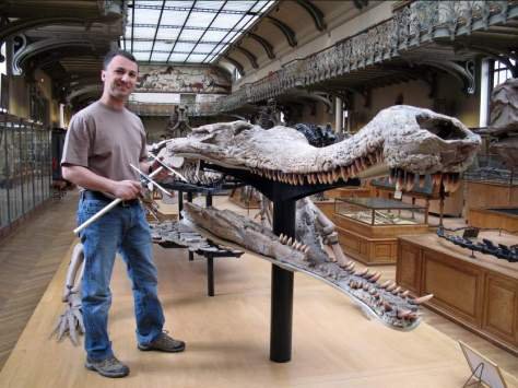 Sarcosuchus skull next to a human