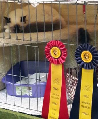 Cat behind wire-2