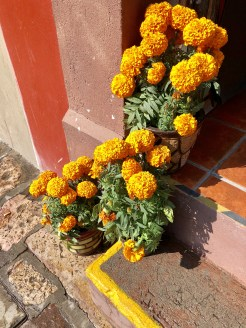marigolds are all over