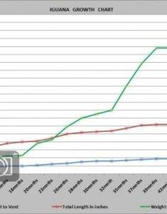 ag also iguana growth chart our reptile forum rh ourreptileforum