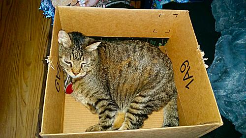 Mister's New Amazon Box