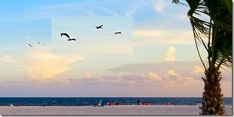 Gulf Shores 2018 -  Pelicans