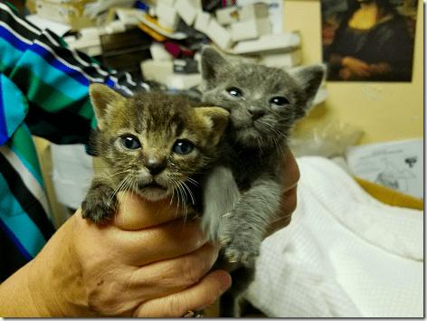 Jennfier's Kittens