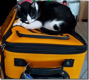 Karma Sleeping on Suitcase