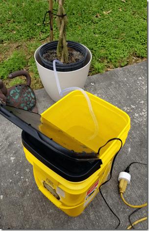 Hibiscus Watering Setup