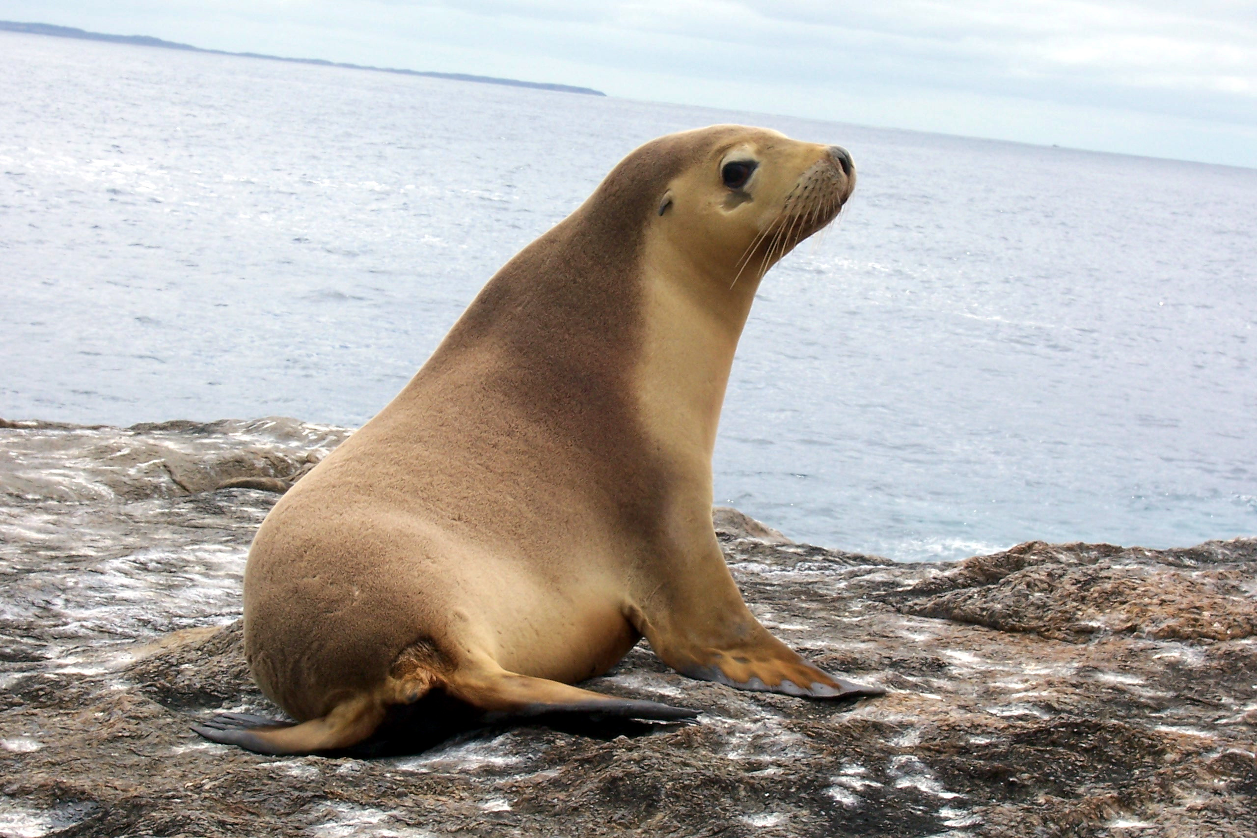 Harbor Seals And Sea Lions Fun Facts
