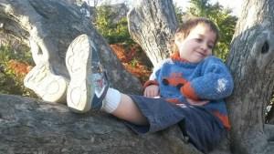 Matthew in a Tree