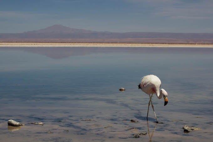 Chile blog-28