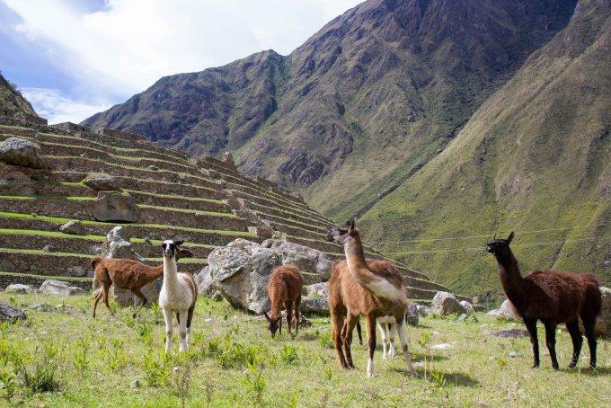 our simple adventure machu picchu inca trail-27