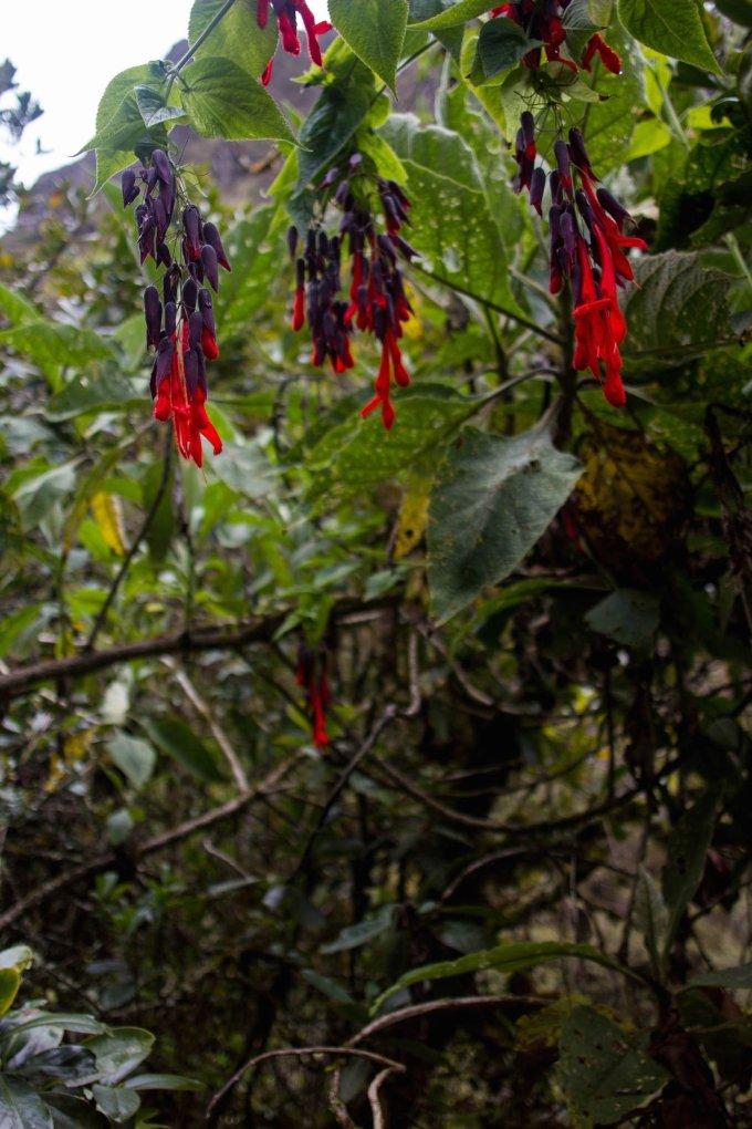 our simple adventure machu picchu inca trail-33