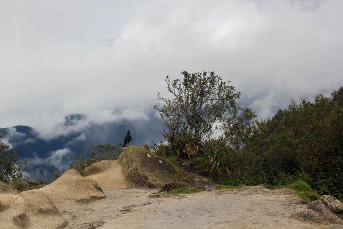 our simple adventure machu picchu inca trail-60