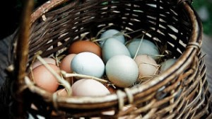 Making Money Mondays – Selling Eggs to More Than Family and Friends