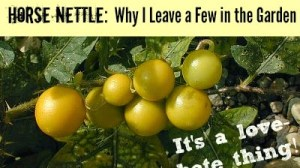 Horse Nettle?  Good or Bad?