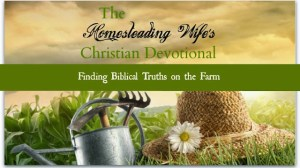 Confession of an Unworthy Homesteader