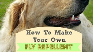 How to Make Your Own Fly Repellent for Your Dog's Nose