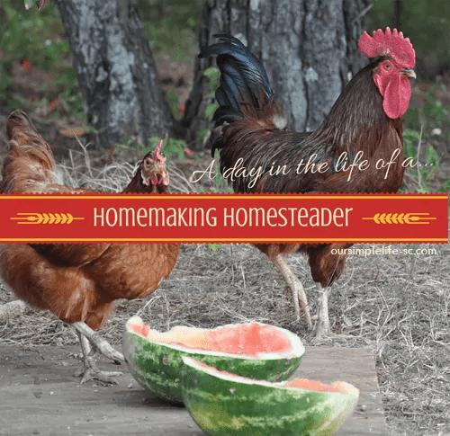 homemaking homesteader