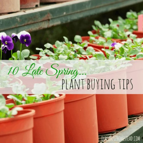plant buying tips