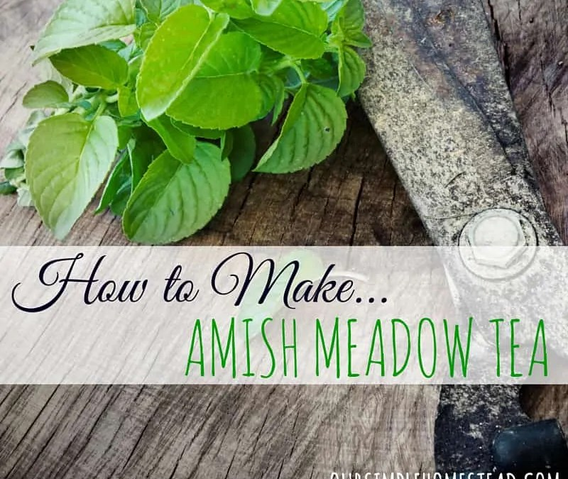 How to make Amish Meadow Tea