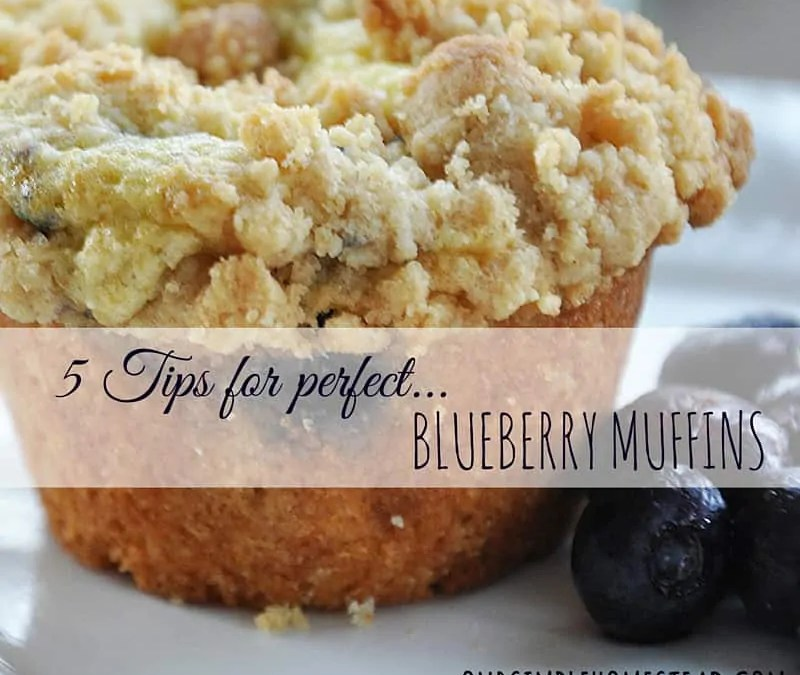 5 Tips for Perfect Blueberry Muffins
