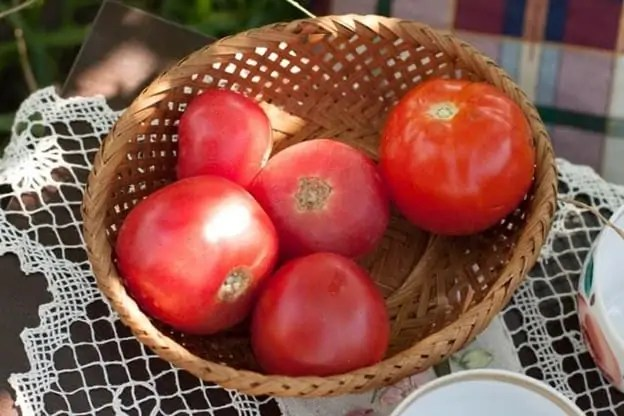 homestead tomaotes